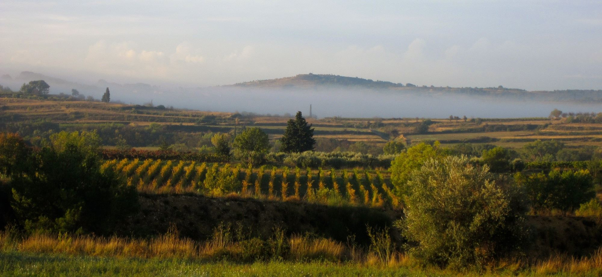 Vineyards and olive trees, discovering the nectar of the Languedoc region