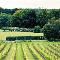Skepparps Vineyard