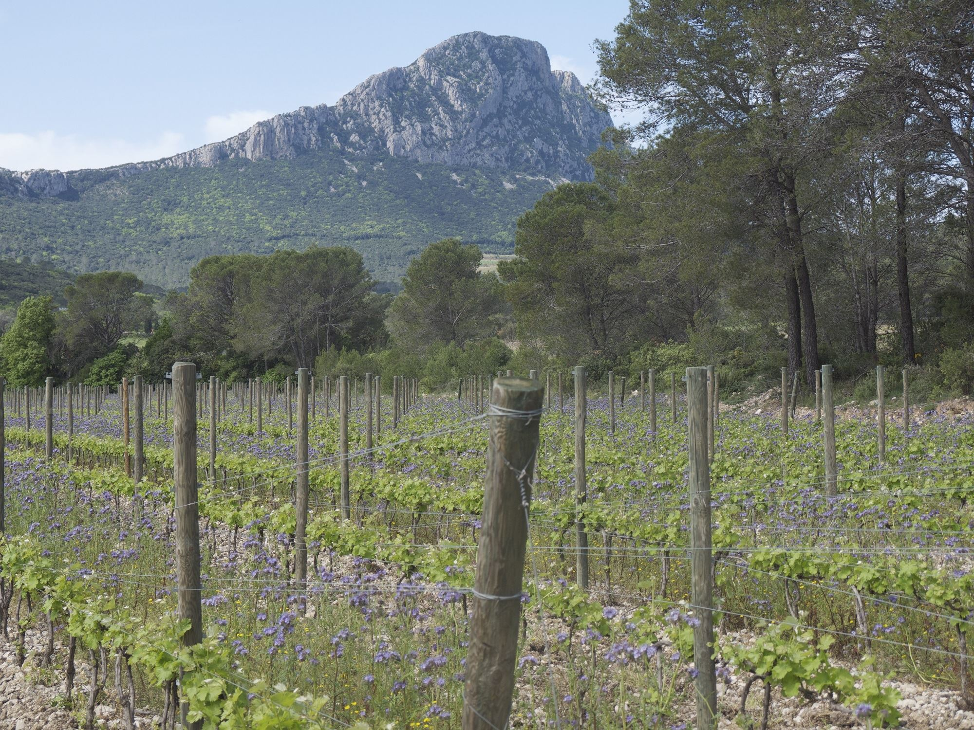 A Pic Saint Loup wine experience - Instant Terroir